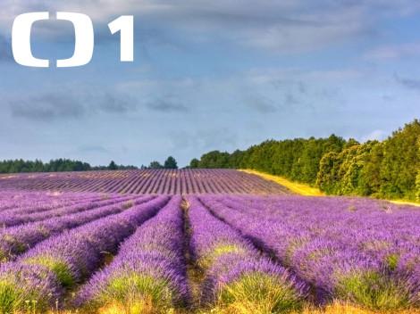 Cestopis Na cestě po Provence